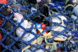 """CCR Scientists push to add """"huge"""" fish trawling emissions to national inventories"""