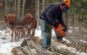 Logging-by-Horse
