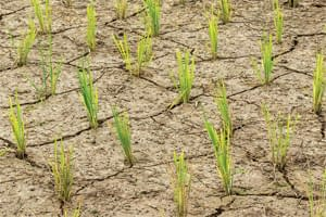 Global_agriculture_will_be_drastically_altered_by_climate_change
