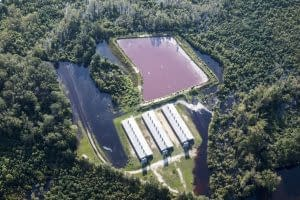 hog farm flooded